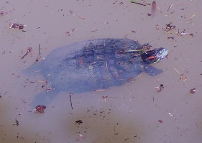 http://www.bansuisou.org/guide_dtl/2011/09/10/images/20110910-1.JPG